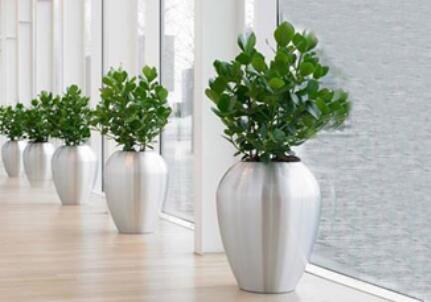 植物租摆服务有哪些特点