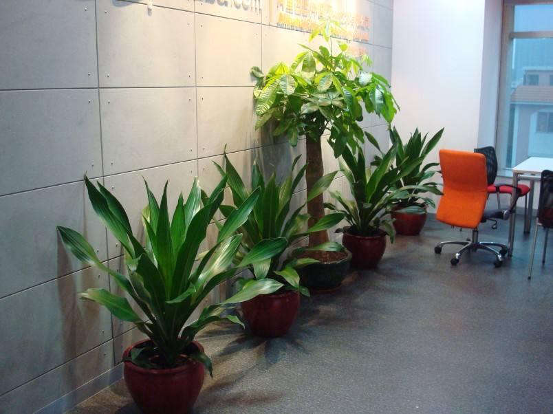 选择植物租摆可以从哪些方面入手