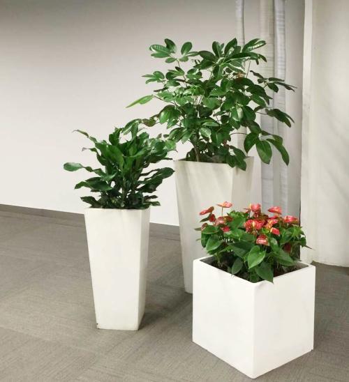 植物租摆应该具备哪些条件