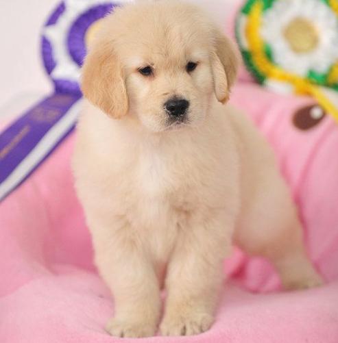 宠物在线知识问答告诉您夏季养狗的要点