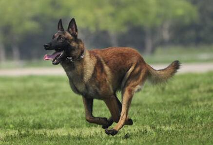 选择训狗教程具有哪些好处