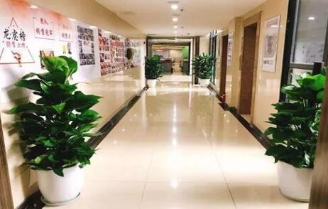 会场植物租赁机构介绍:办公室绿化要注意什么