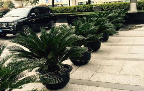 选择会场植物租赁应注意的事项