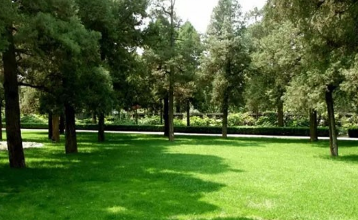 上海小区绿化养护的步骤有哪些?