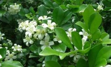 上海小区绿化养护公司的特点有哪些?