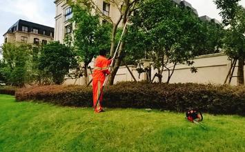 如何选择上海小区绿化养护公司?