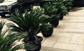 会场植物租赁的优势