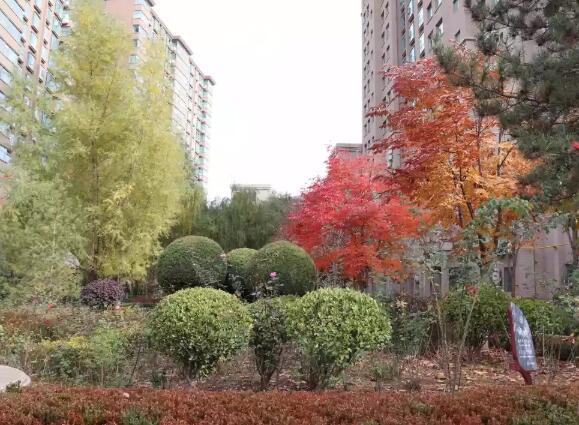 公园绿化养护公司讲解树木的整形与修剪要点