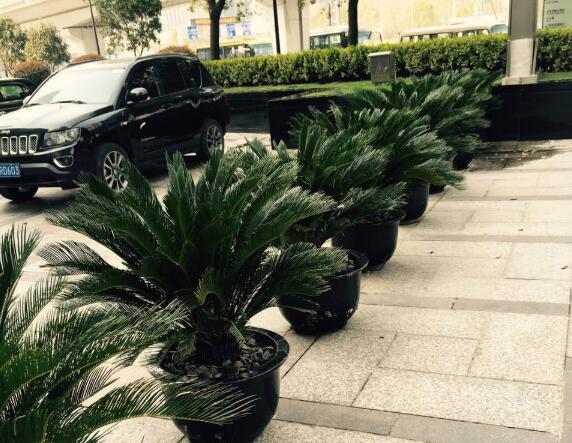 如何选择会场植物租赁机构?