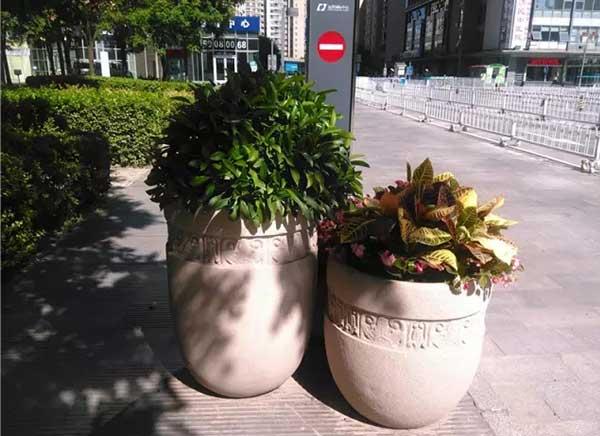 会场植物租赁机构解析:不同类型会场适合的植物种类
