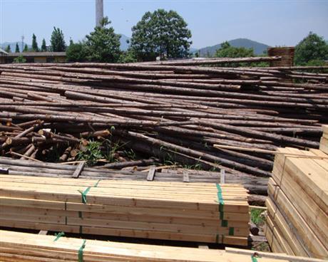 木材进口清关报备需要注意哪些细节问题