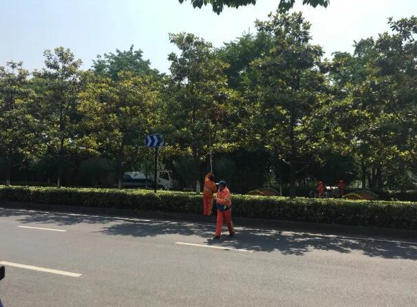上海市政绿化养护的基本工作内容有哪些