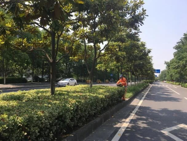 上海市政绿化养护工作包含哪些内容