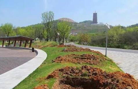 上海市政绿化养护的对象有哪些