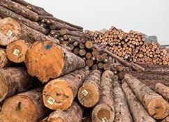 选择木材进口清关都需要注意哪几个方面?