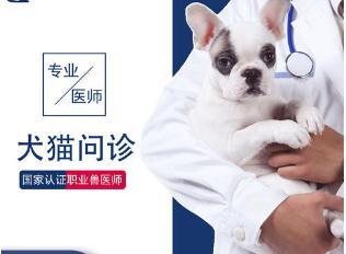 宠物医院在线咨询.jpg