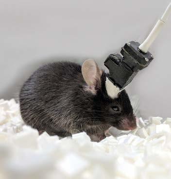 动物神经导航系统.jpg