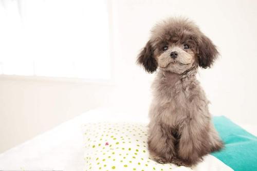 宠物在线医院介绍:小狗崽如何正确喂养.jpg