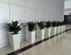 上海绿植租赁3.jpg