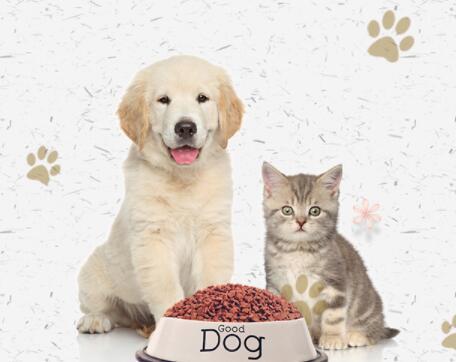 在线宠物医生2.jpg