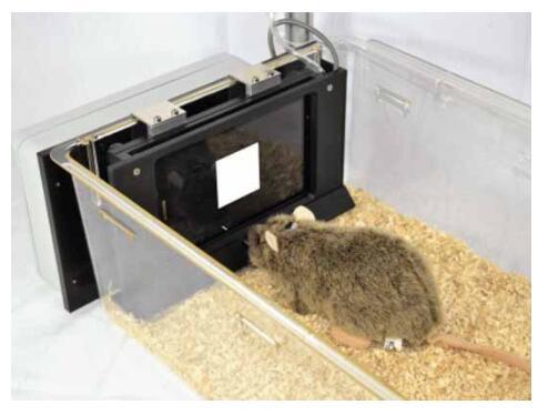 动物行为学迷宫2.jpg