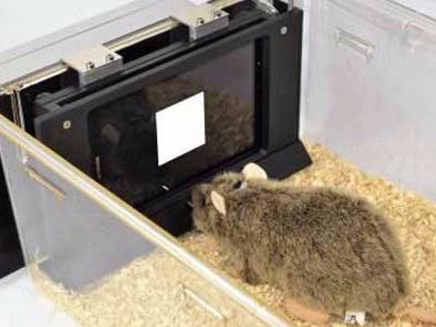 动物行为学软件.jpg