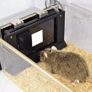 动物听觉刺激系统.png