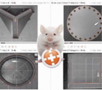 动物听觉刺激系统.jpg